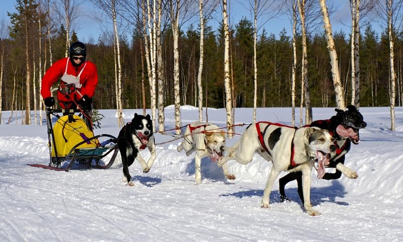 Mammoth mountain california dog sledding dog sled tours for Mammoth mountain cabins pet friendly